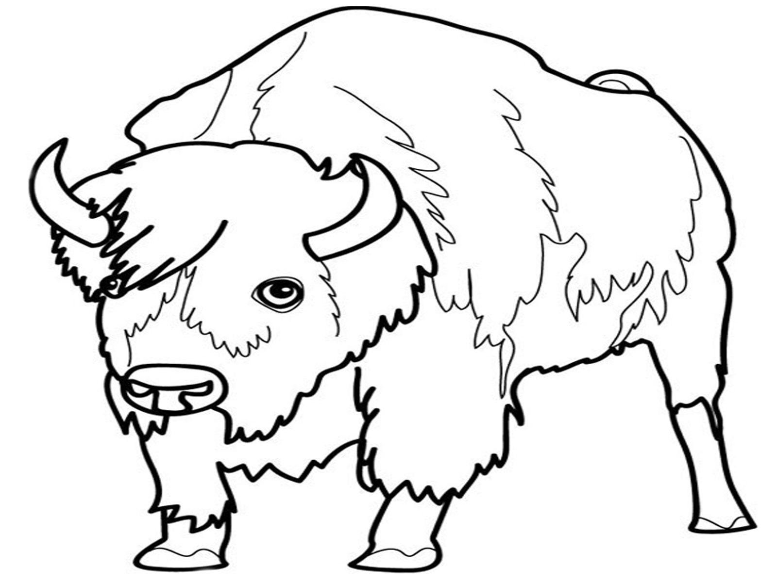 Dessin bison et indien - Coloriage bison ...