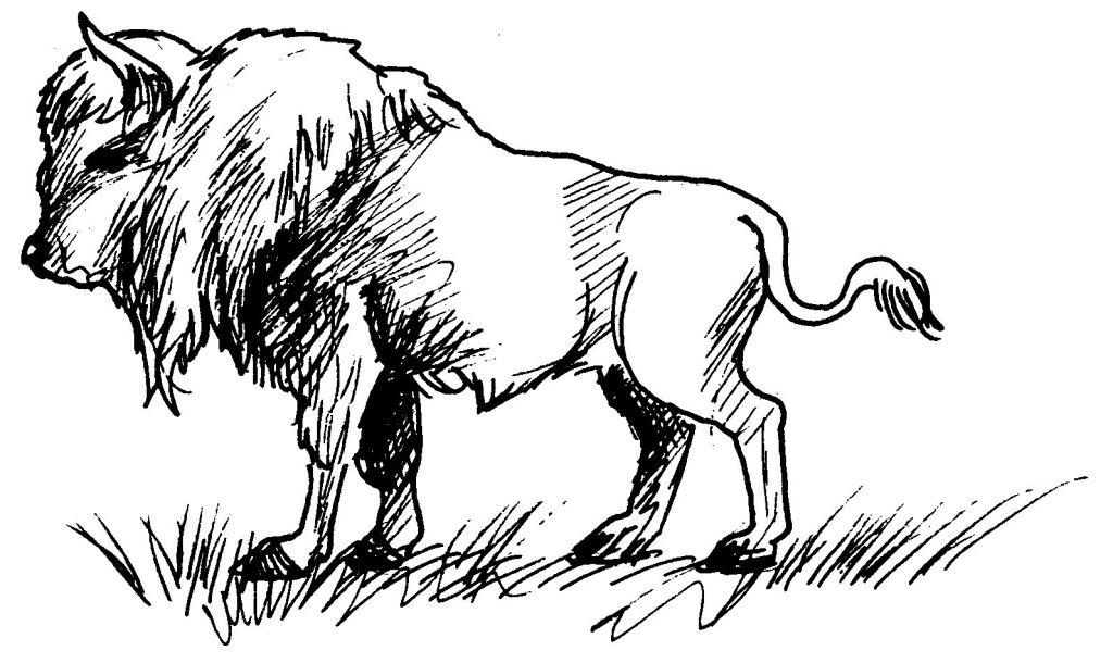 coloriage � dessiner bison a imprimer gratuit