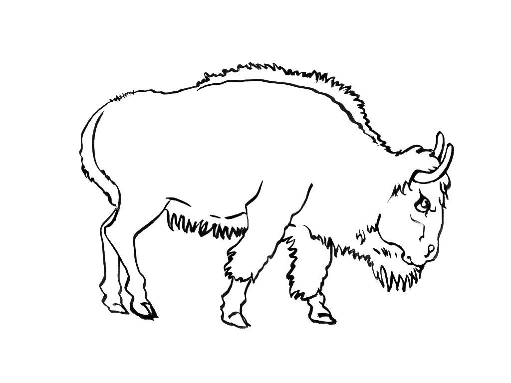 coloriage d'un bison