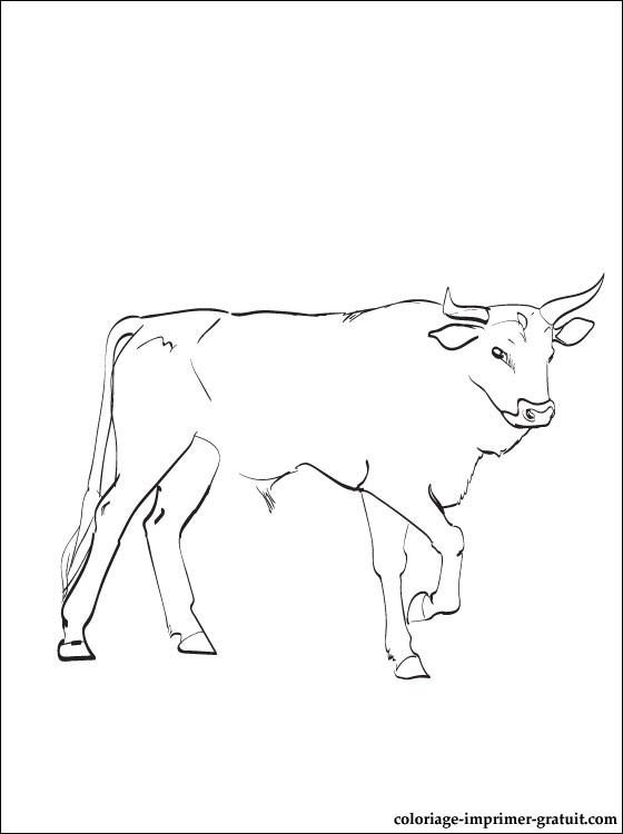 coloriage � dessiner � imprimer bison