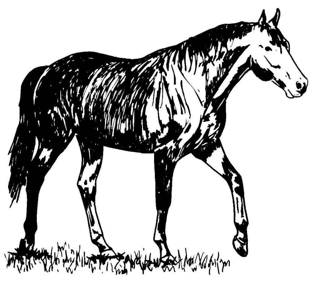 dessin bison d'amérique