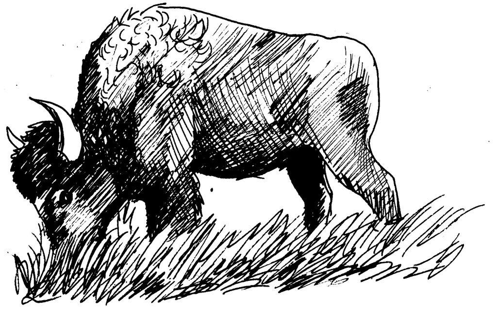 dessin bison et indien