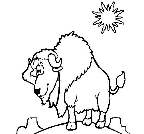 dessin � colorier gratuit de bison