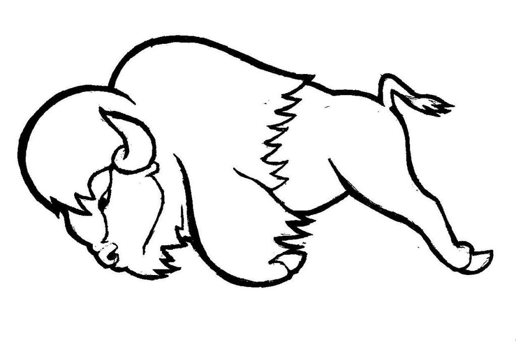 coloriage à dessiner bison à imprimer