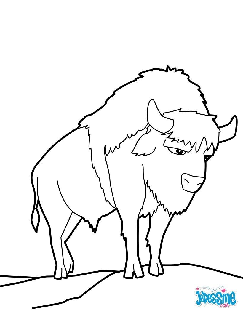 Coloriage de bison - Coloriage bison ...