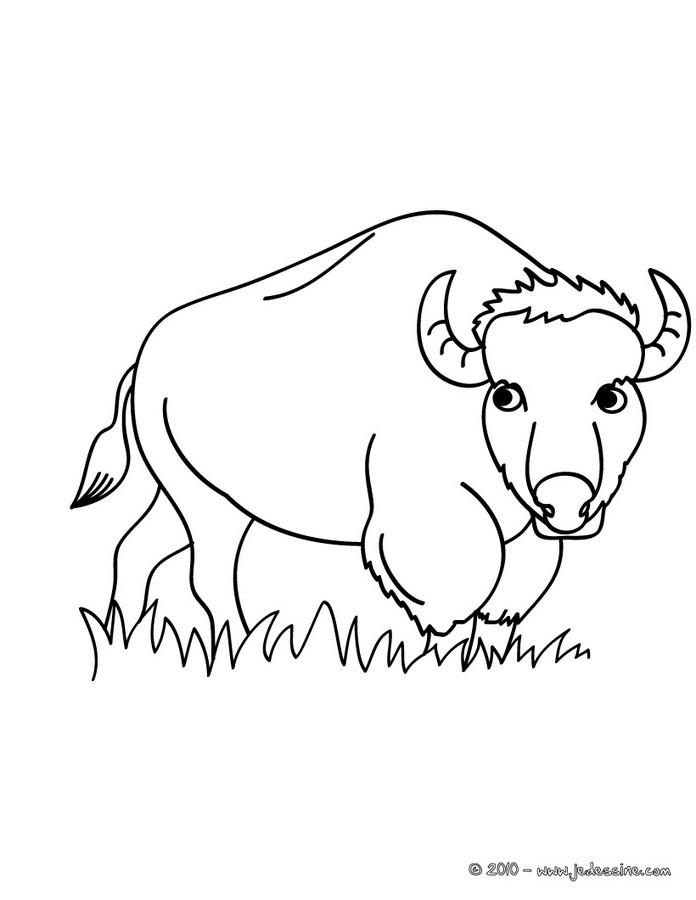 dessin bison à imprimer