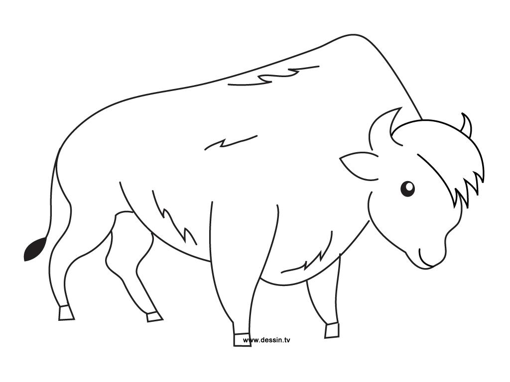 coloriage à dessiner graine de bison