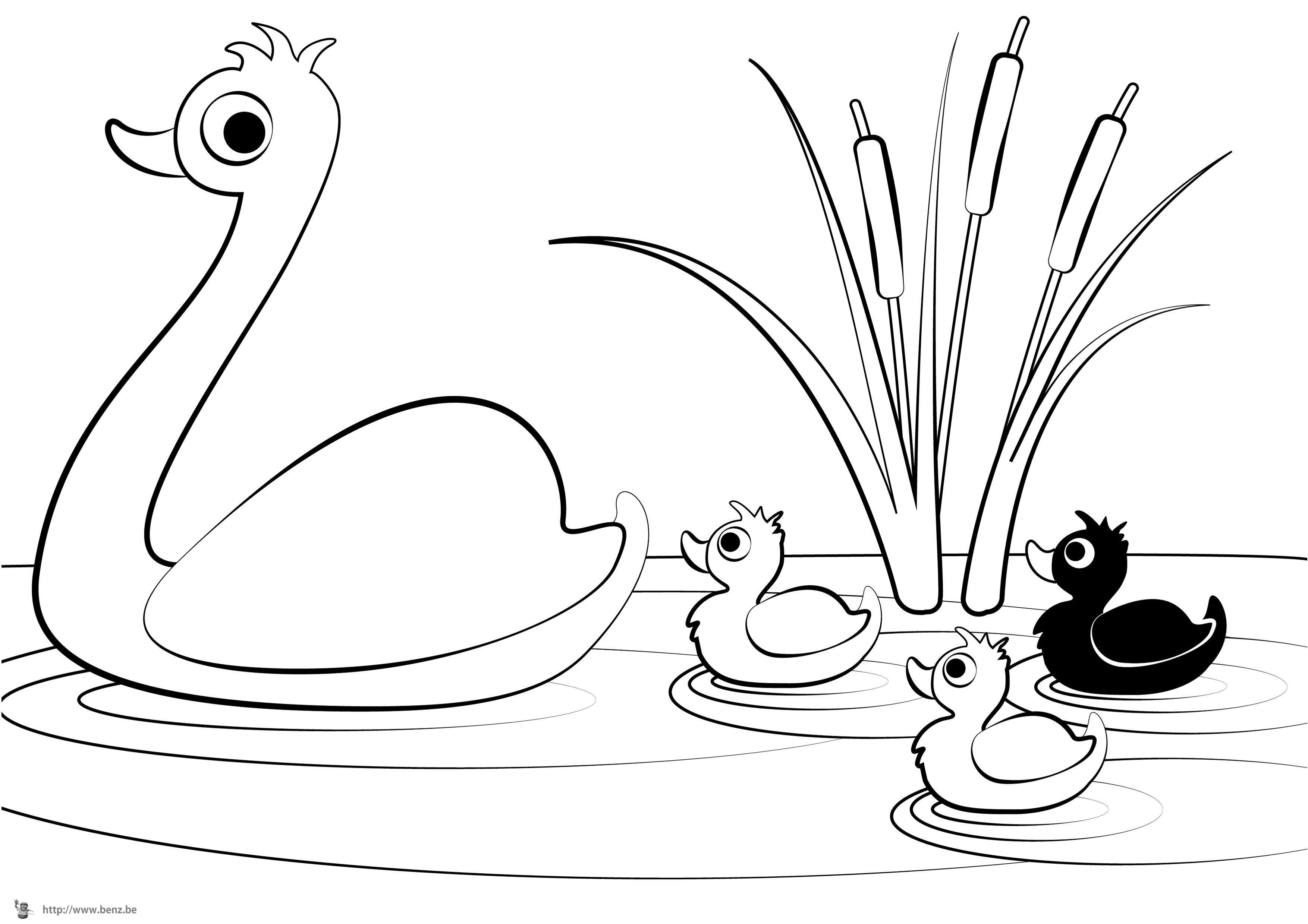Coloriage de dessins de canards - Image canard a imprimer ...