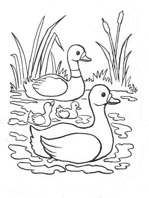 19 dessins de coloriage canard colvert imprimer - Canard a colorier ...