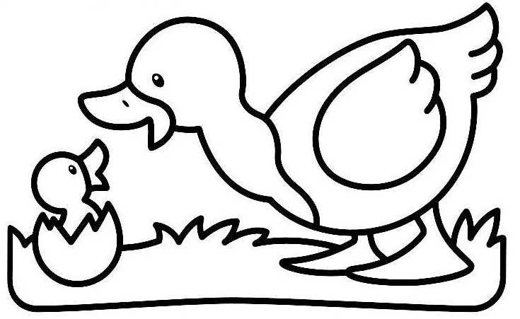 Coloriage de canard a imprimer gratuit - Image canard a imprimer ...