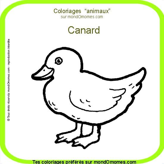 dessin à colorier canard a imprimer gratuit