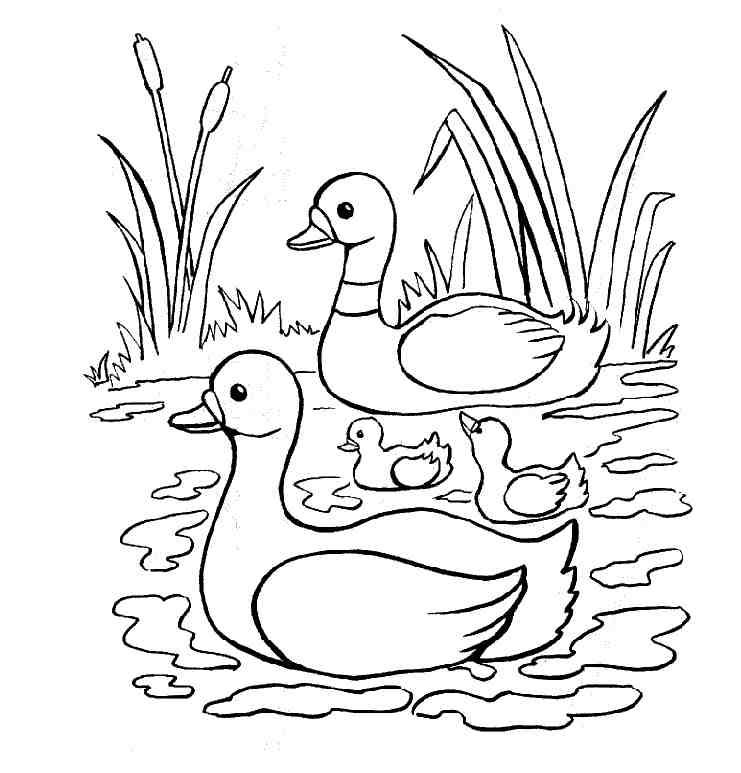 dessin canards imprimer