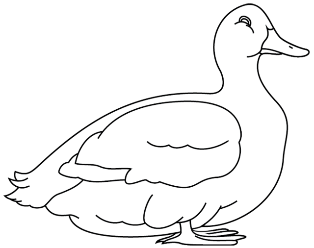 Coloriage de canard a imprimer gratuit - Coloriage vilain petit canard ...