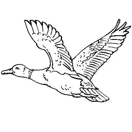 Coloriage de canard a imprimer - Image canard a imprimer ...