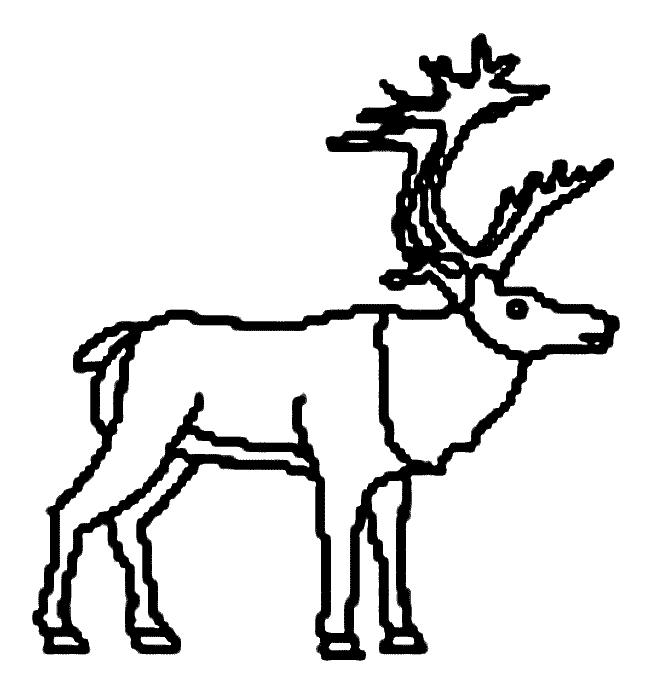 dessin tete de caribou