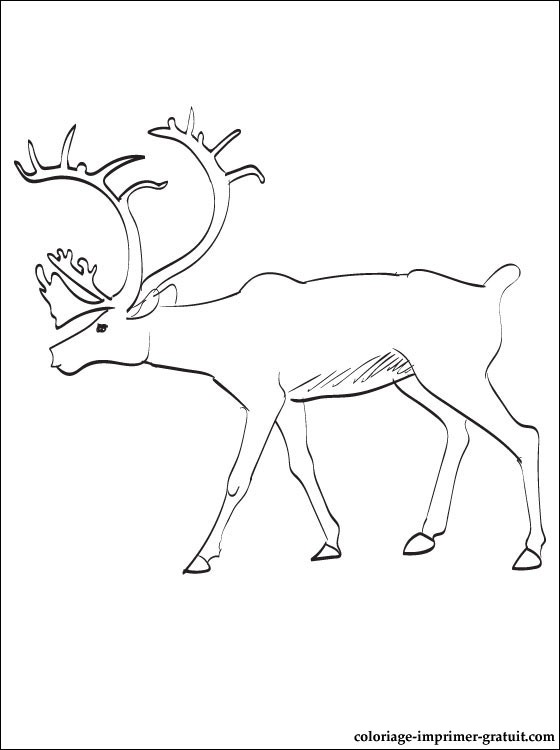coloriage tete de caribou