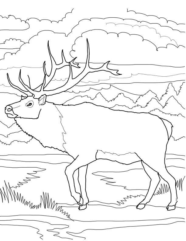 coloriage � dessiner caribou