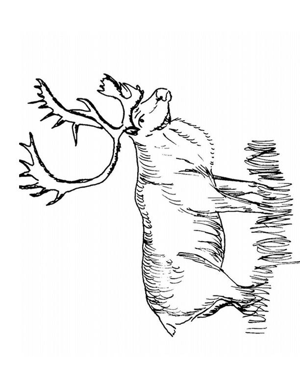 dessin caribou imprimer