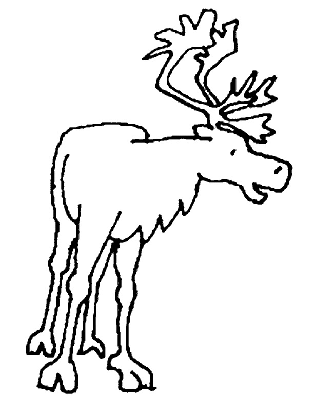 coloriage � dessiner caribou imprimer