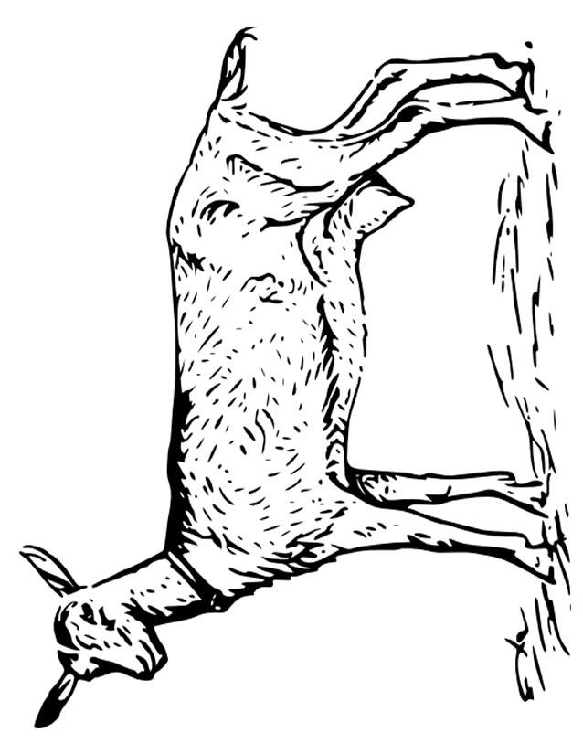 coloriage � dessiner caribou gratuit