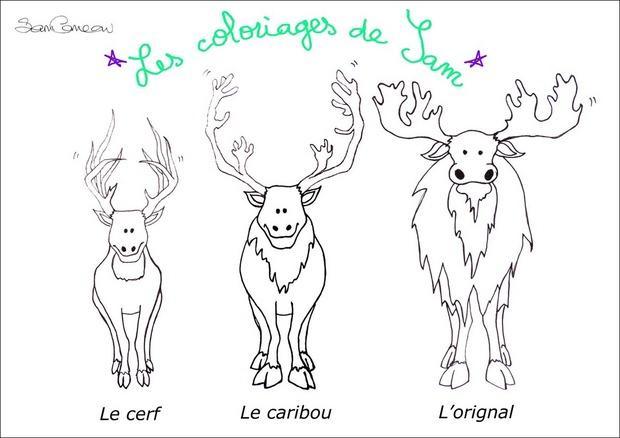 dessin � colorier caribou