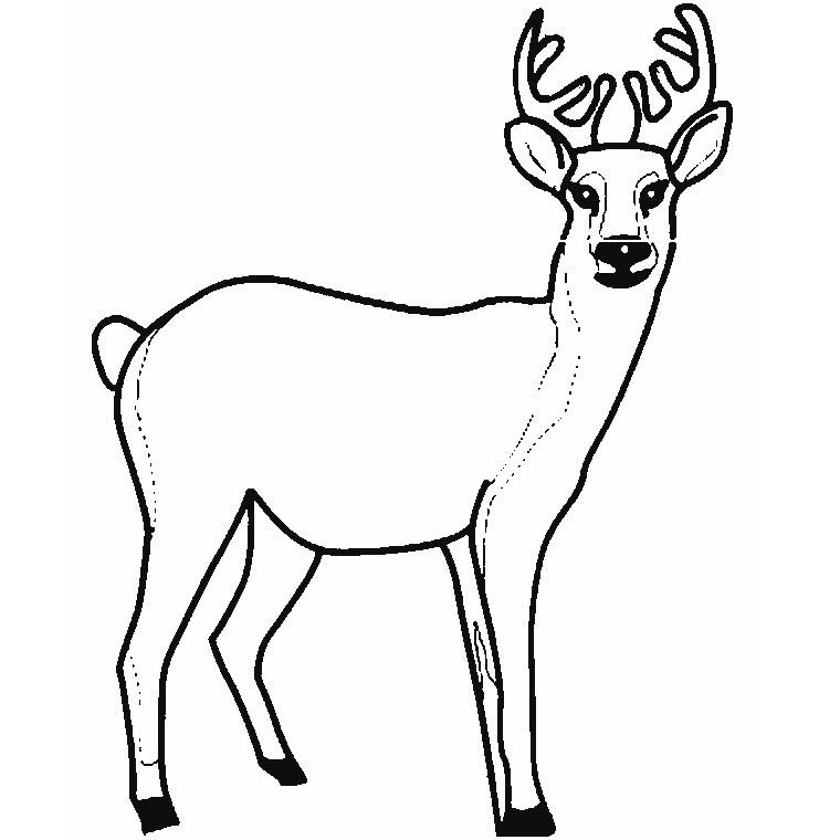 19 dessins de coloriage cerf et biche imprimer - Babouin et belette ...