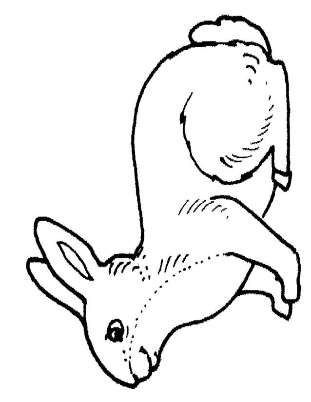 20 dessins de coloriage cerf lapin imprimer - Coloriage a imprimer lapin ...