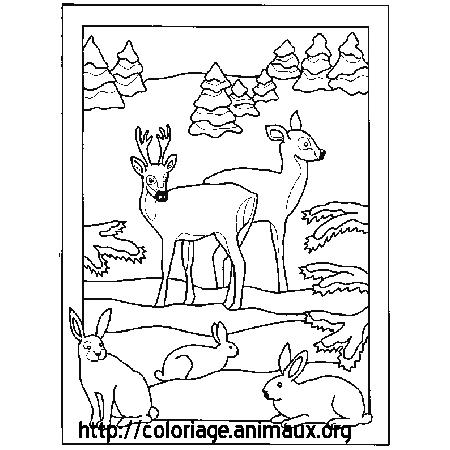 coloriage à dessiner à imprimer cerf volant