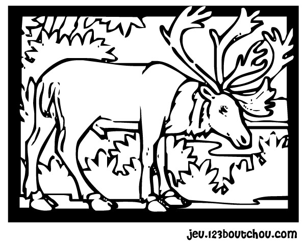 coloriage à dessiner lucane cerf volant