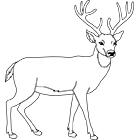 dessin cerf volant coloriage à dessiner