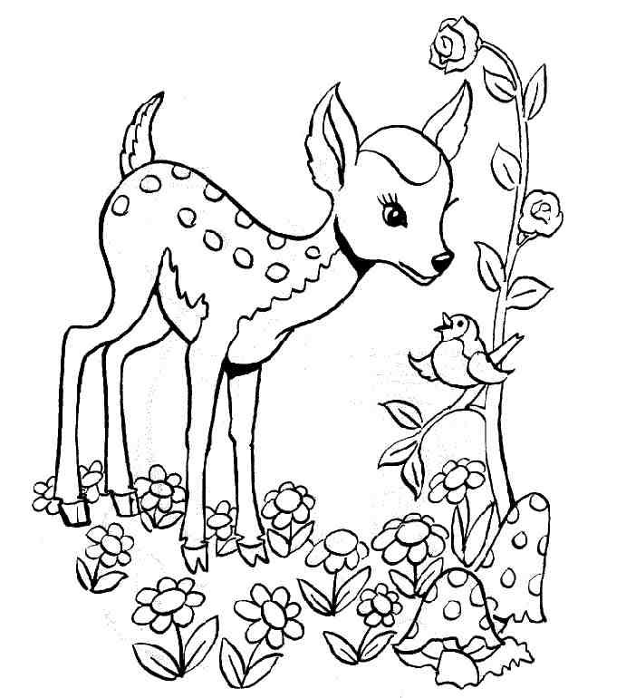 dessin cerf biche faon