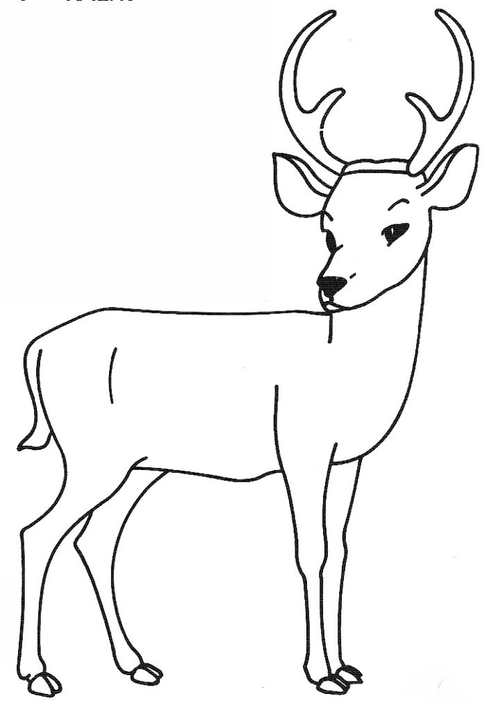dessin à colorier à imprimer cerf