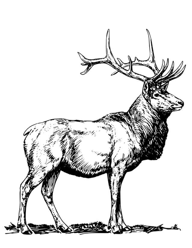 dessin à colorier cerf-volant à imprimer