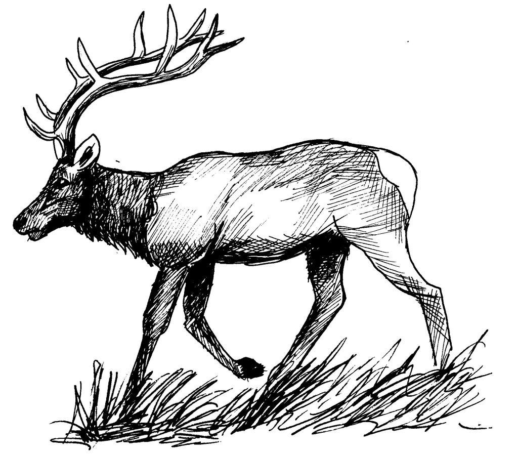 dessin à colorier cerf gratuit