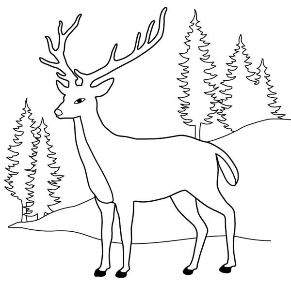 dessin à colorier cerf biche faon