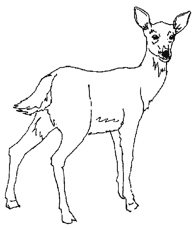 dessin cerf qui brame