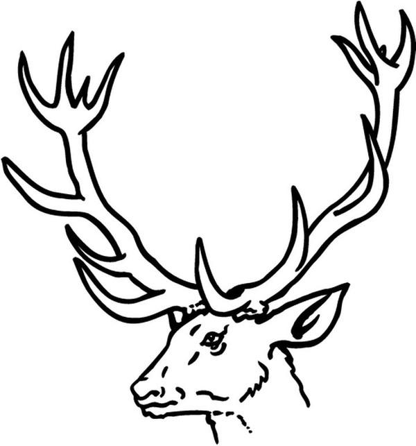 coloriage à dessiner de cerf volant