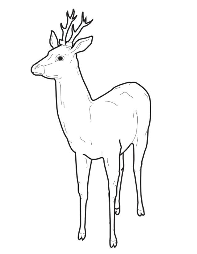 dessin de cerf de noel a imprimer