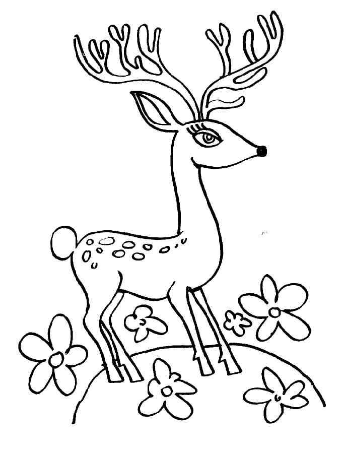 coloriage à dessiner cerf et biche