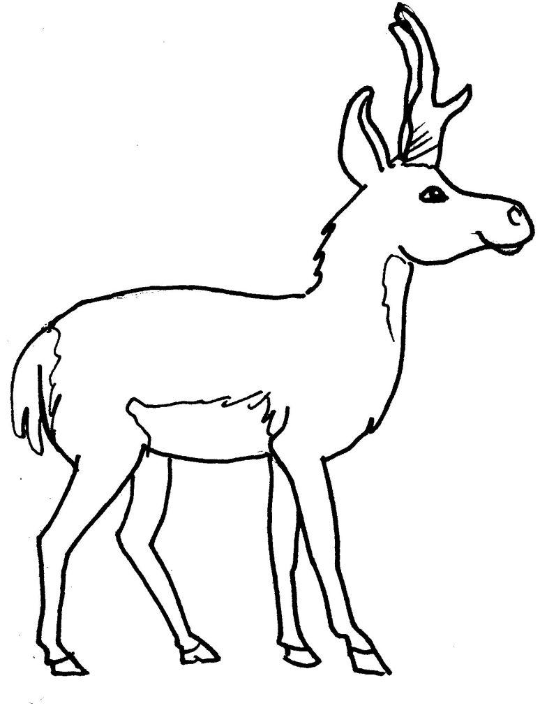 dessin d'un cerf imprimer