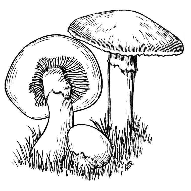 36 dessins de coloriage Champignon à imprimer