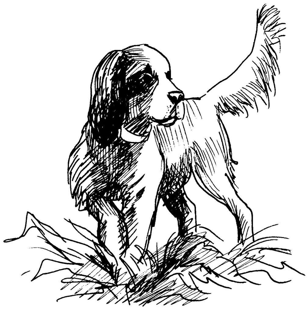 12 dessins de coloriage chasseur sanglier imprimer - Dessin de chasse ...
