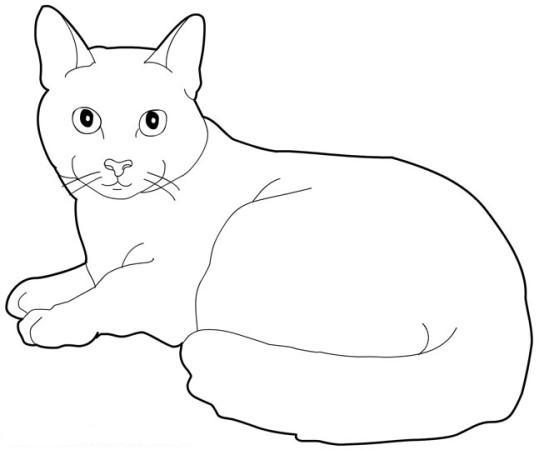 20 dessins de coloriage chat imprimer imprimer - Dessins de chats rigolos ...
