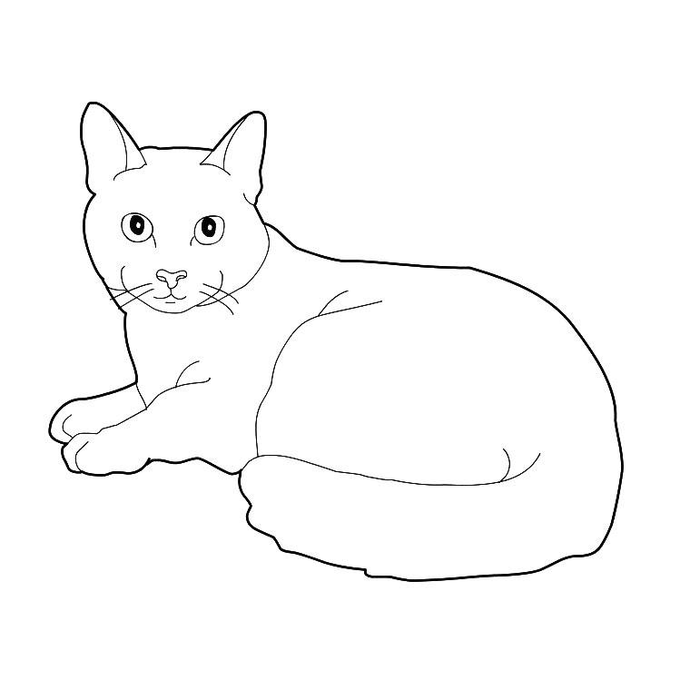 coloriage de chaton dans un panier