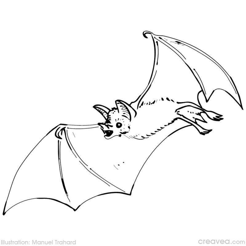 dessin à colorier de chauve souris pour halloween