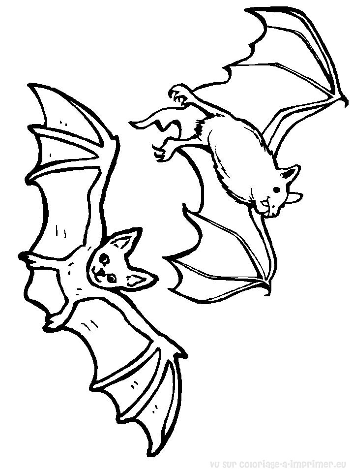 coloriage à dessiner gratuit à imprimer chauve souris