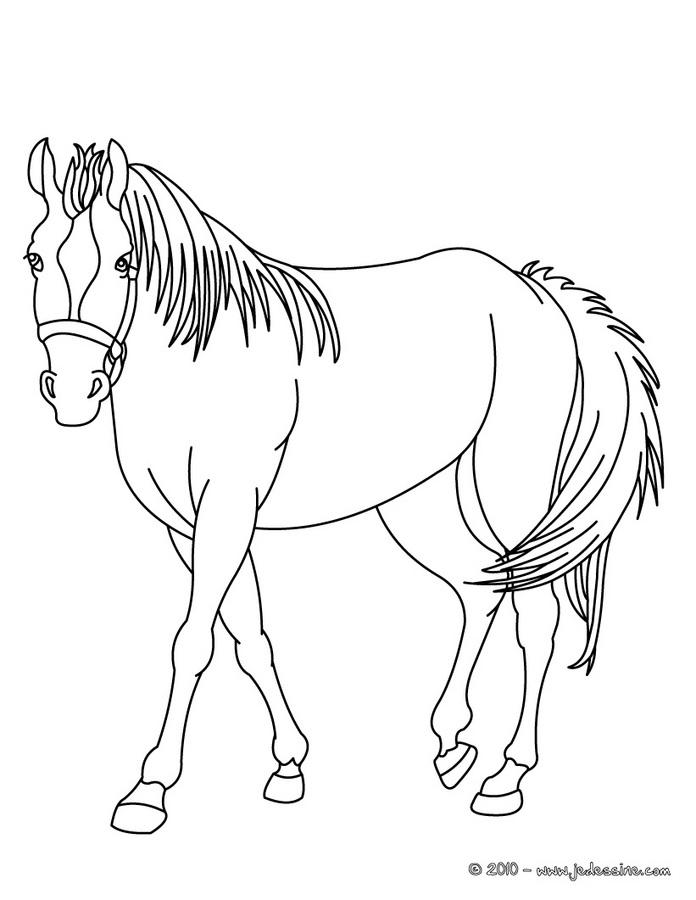 coloriage chevalier du zodiaque a imprimer gratuit
