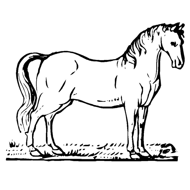 Coloriage interactif chevaux - Coloriage chevale ...
