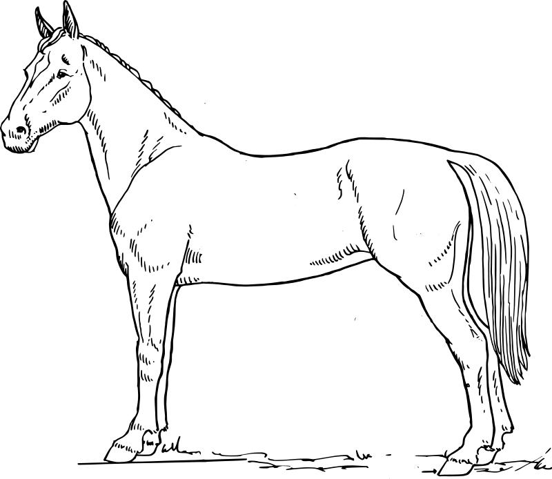 coloriage de cheval jeu