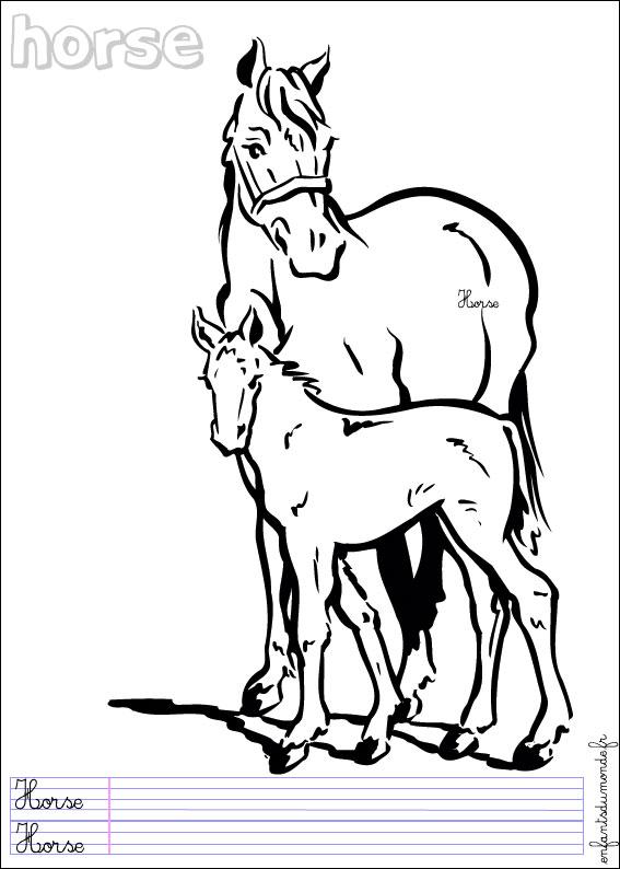 coloriage les chevaliers du zodiaque